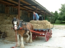 Barry and the horses moving some hay