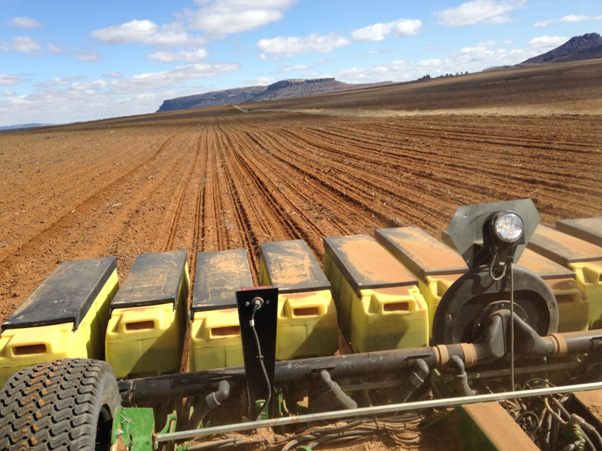 Wheat planting image 1