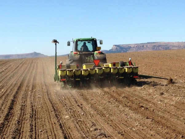 Wheat planting image 2