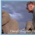 A TRIBUTE TO DAVID SHEPHERD, CBE